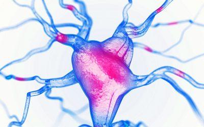 GABA: el neurotransmisor que hace crecer tus músculos mientras duermes