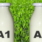 La verdad sobre la leche A1 y A2